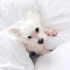 cute puppy, dogs, animals, tumblr // pinterest and insta → siobhan_dolan