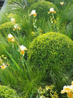 Vai Giardinaggio - Aiutare Nuova Zelanda Grow - Giardino Ispirazione, suggerimenti e consigli dell'esperto