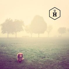 DOXIES DON'T DO MIST. But they do do balls. Come play with us... www.houndworthy.com/shop/play