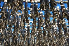 Throughout the summer months you will see cod ('stockfish') hanging from wooden racks in every village.