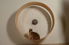 How to Build a Cat Wheel                                                                                                                                                                                 More