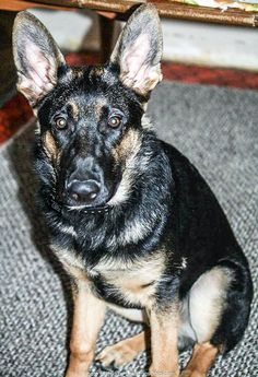 Lost Dog - Male - Hiram / Troy Twp, OH, USA 44234