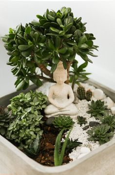 How to make your own zen terrarium in 8 easy steps! Garden Terrarium, Succulent Terrarium, Succulents Garden, Miniature Zen Garden, Mini Zen Garden, Indoor Zen Garden, House Plants Decor, Plant Decor, Mini Jardin Zen