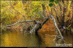 Volkspark Rehberge (Okt 2014) #Berlin #Deutschland #Germany #biancabuergerphotography #igersgermany #igersberlin #IG_Deutschland #IG_berlincity #ig_germany #shootcamp #shootcamp_ig #pickmotion #berlinbreeze #diewocheaufinstagram #berlingram #visit_berlin #canon #canondeutschland #EOS70D #landschaft #landscape #Herbst #autumn #colourful #bunt #Baum #tree