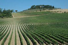 """Cecchi investe sul Chianti Classico e acquisisce Villa Rosa. Come hanno dichiarato i fratelli Cecchi: """"Crediamo e amiamo il Chianti Classico e vogliamo essere tra i portavoce del suo rilancio vinicolo"""""""