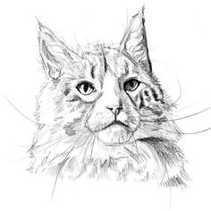 Meow means woof in cat.       #sketch #catsofinstagram #drawing #cat #art #cats #drawings #sketchbook #catstagram #artist #cats_of_instagram #draw #sketching #catlover #instacat #artwork #illustration #cats_of_world #catoftheday #sketches #kitty #pencil #sketch_daily #meow #instaart #cat_features #drawingoftheday #painting #catnap #drawingart Drawing S, Art Drawings, Cat Sketch, Cat Art, Insta Art, Sketching, Cats Of Instagram, Cat Lovers, Pencil
