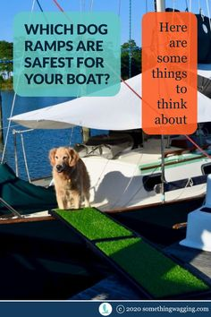 Does your dog need a ramp to get on and off the boat? Check out three different styles and see which is best for your dog. Dogs On Boats, Living On A Boat, Dog Ramp, Shock Collar, Different Dogs, Kinds Of Dogs, Two Dogs, Pet Travel, Dog Accessories