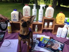 Even your pooches can benefit from Aloe.