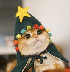 Cute Overload: Internet`s best cute dogs and cute cats are here. Aww pics and adorable animals. Christmas Animals, Christmas Cats, Christmas Humor, Merry Christmas, Christmas Goodies, Christmas 2019, Christmas Stockings, Funny Cats, Funny Animals