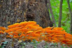 Magical Mushrooms -  by Angie Peters Reszinski, via 500px