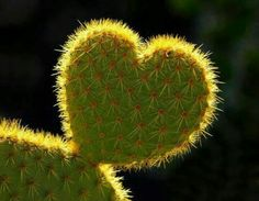 Prickly Heart ♡