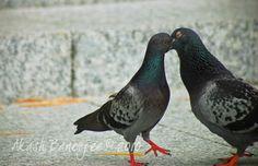 Birdies kissing