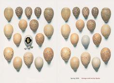 Mark Abrams Book Design
