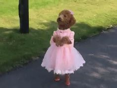 New party member! Tags: dog pretty dress