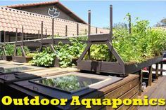 The Important Aspects Of Outdoor Aquaponics http://diyaquaponicsplans.com/articles/aquaponics/outdoor-aquaponics/