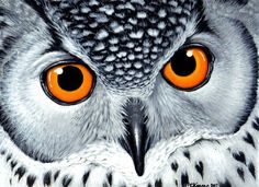 Image result for paintings of owls