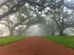 Good morning from Oak Alley!