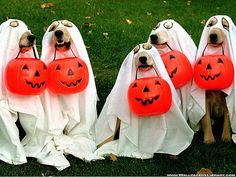Dogs in ghost costumes for Halloween