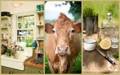 Cowparsley the Blog I LOVE cows! My country kitchen