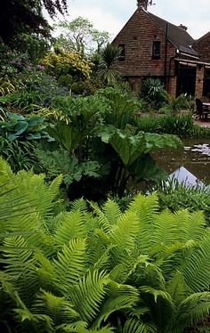 A former damp and shady lawn replaced with a pond, waterfall, deck and boardwalk to bring new life and vitality to a peaceful and secluded garden