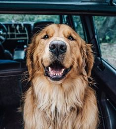 Stunning hand crafted golden retriever accessories and jewelery available at Paws Passion Shop! Represent your golden retriever pup with our merchandise! Golden Retrievers, Chien Golden Retriever, Female Golden Retriever, Labrador Retrievers, Golden Retriever Names, Labrador Puppies, Cute Puppies, Cute Dogs, Baby Animals