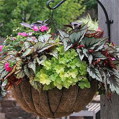 Planter Idea Book, Container Gardens, Pots, Planters, Windowboxes, Hanging Baskets: Gardener's Supply