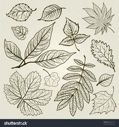 Vector set of autumn leafs illustration - design elements. Thanksgiving