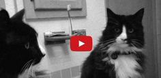 Henri Le Chat Noir is the winner of the first ever Internet Cat Video Awards. It is a brilliant video for all cat lovers - click here to watch it.