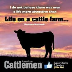 Life on a cattle farm....