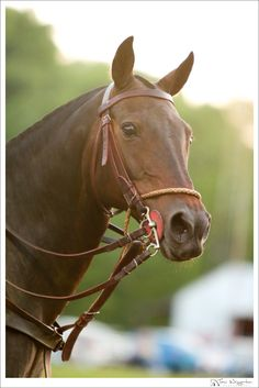 Polo Pony..... We had a polo horse named Kitty she was a Beautiful pinto but her feet went bad so we eventually had to put her down.... Not only was she MY horse but she was also my best friend. I used to ride her every morning..... I miss her SO much :(