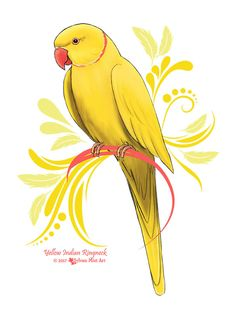 A cute Yellow Indian Ringneck Parrot. This is my own handpainted original design. If you like my artwork and want to support me, please make a purchase as the site linked in the pin! Art Drawings For Kids, Bird Drawings, Art Drawings Sketches, Animal Drawings, Easy Drawings, Parrot Drawing, Parrot Painting, Passaro Ring Neck, Pichwai Paintings