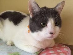 里親さんブログ10日里親会参加予定猫 その7 - http://iyaiya.jp/cat/archives/73887