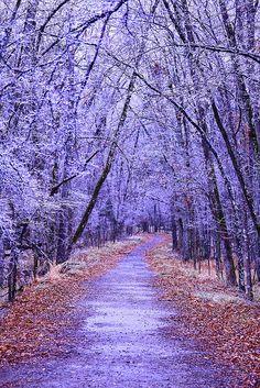 Walk Path in Burns Park. Beautiful Landscape Wallpaper, Scenery Wallpaper, Beautiful Landscapes, Landscape Art, Landscape Photography, Nature Photography, Watercolor Landscape, Beautiful World, Beautiful Images