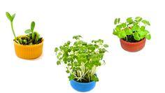 a teensy weensy bottlecap garden - great way to teach kids about growing stuff!