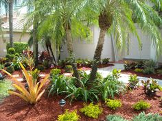 Gallery Fl Landscape And Designs Fl Landscape Services within Florida Landscaping Ideas For Backyard Florida Landscaping, Florida Gardening, Small Backyard Landscaping, Tropical Landscaping, Backyard Ideas, Tropical Gardens, Backyard Designs, Landscape Borders, Landscape Design Plans