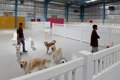Huge indoor dog park is all about beating the heat Dog Boarding Kennels, Pet Boarding, Dog Kennel Designs, Kennel Ideas, Indoor Dog Park, Dog Playground, Pet Spa, Pet Hotel, Pet Resort