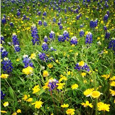 March in Texas means beautiful Texas Wildflowers everywhere you look.
