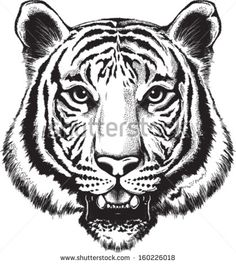 tiger face black and white - Google Search                                                                                                                                                                                 Mehr