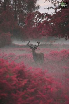 tulipnight:  another stag, another planet by Max Ellis