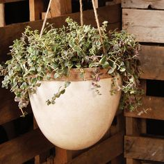 Hanging Out Planter | dotandbo.com