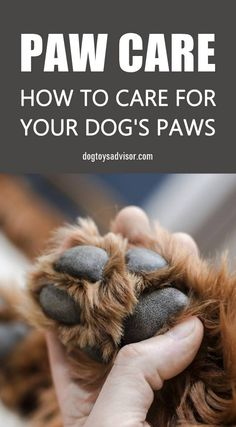 Paw care is just as important for our dogs as it is for us humans. Dog's paws can suffer from blisters, torn paw pads, burnt paws or mats between their toes. Here are 5 rules to properly care for your dog's paw pads. Pet Health Insurance, Dog Insurance, Pet Care Tips, Dog Care, Pet Tips, Dog Hacks, Dog Grooming, Goldendoodle Grooming, Poodle Grooming