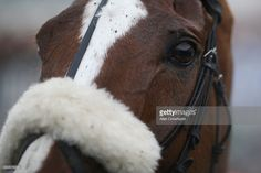 Native River at Chepstow Racecourse on December 27, 2016 in Chepstow, Wales.