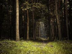 wood - JPG Photos