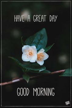 Looking for for inspiration for good morning motivation?Check out the post right here for unique good morning motivation ideas. These amuzing quotes will brighten your day. Good Morning Motivation, Good Morning Handsome, Good Morning Flowers, Good Morning Sunshine, Good Morning Picture, Good Morning Messages, Good Morning Good Night, Morning Pictures, Good Morning Wishes