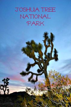 Unspoiled desert scenery awaits at this national park in California, yet close to Palm Springs for fun in a desert.