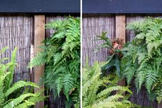 How To: Turn Your House Into a Staghorn Fern Party Staghorn Plant, Farm Gardens, Garden Farm, Platycerium, Epiphyte, Tropical Garden, Leaf Shapes, Fruit Trees, Air Plants