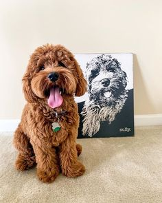 Likes, 122 Comments - Sully Miniature Labradoodle, Cute Dogs And Puppies, Miniatures, Teddy Bear, Photo And Video, Toys, Videos, Photos, Animals