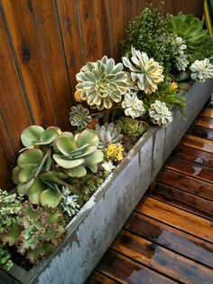trough of succulents