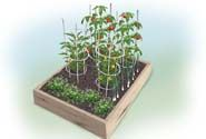 This kids vegetable garden plan from Bonnie Plants features a variety of kid-sized vegetables as well as herbs that are flavorful and attract beneficial insects and butterflies. Kids will love planting and growing this vegetable garden. Watering Raised Garden Beds, Raised Beds, Garden Bed Layout, Garden Layouts, Vegetable Garden Planning, Growing Tomatoes In Containers, Tomato Garden, Tomato Pesto, Pesto Pizza