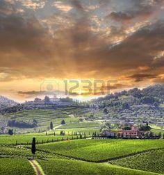 Chianti vi�edo paisaje en Toscana, Italia photo